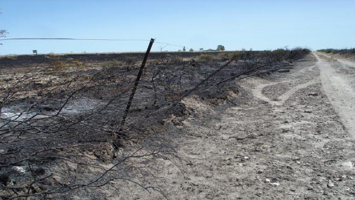 Incendios Rio Negro 1