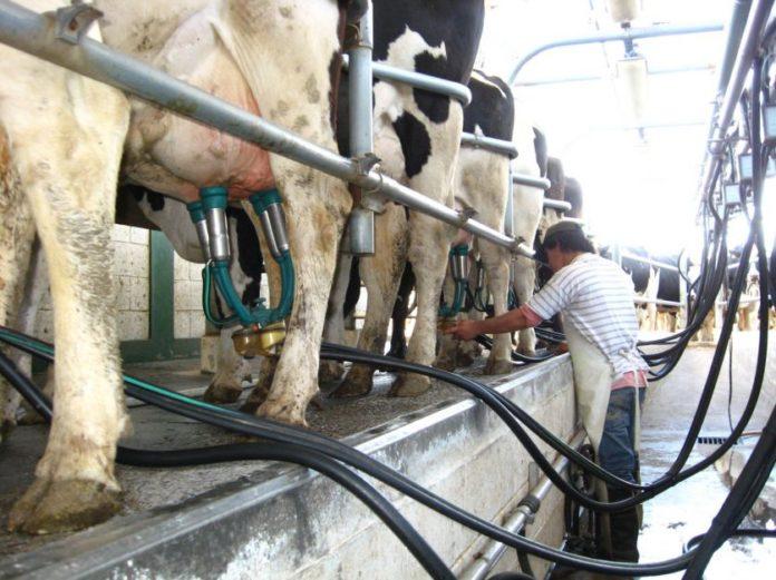 Según el CIL, el sector lácteo atraviesa uno de los momentos más severos de la historia.